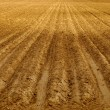 Rows of Furrows in Field - Stock Photo