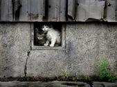 Verdwaalde natte kittens — Stockfoto