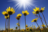 Summer Time Flowers — Stock Photo