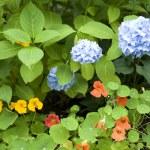 Lush Garden — Stock Photo #2336426