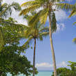 Stock Photo: Tropical View