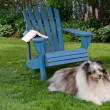 Stock Photo: Backyard Dog