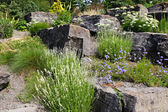 Alpine Garden — Stock Photo