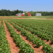 Prince Edward Island Potato Farm — Stock Photo