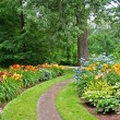 Stock Photo: Daylily Garden 2