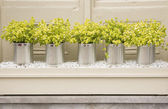 Plant Pots — Stock Photo