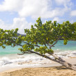 Beachfront Tree — Stock Photo