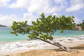 ビーチに面したツリー — ストック写真
