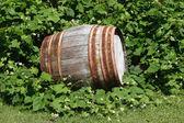 Old Barrel — Stock Photo