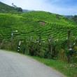 Stock Photo: Road in Cameron Highlands