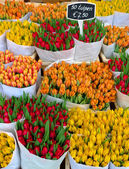 тюльпаны в амстердам — Стоковое фото