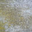 Moss concrete background - Stock Photo