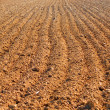 Ploughed field in spring - Stock Photo