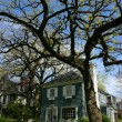 Tree and house in Oak Park — Stock Photo #2468164