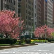 Spring in Park Avenue — Stock Photo #2469206