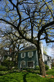 Tree and house in Oak Park — Stock Photo