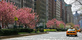 Spring in Park Avenue — Stock Photo