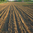 Ploughed field in spring vertical — Stock Photo