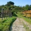Vineyards in fall, vertical — Stock Photo