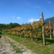 Vineyards in fall — Stock Photo #2471391