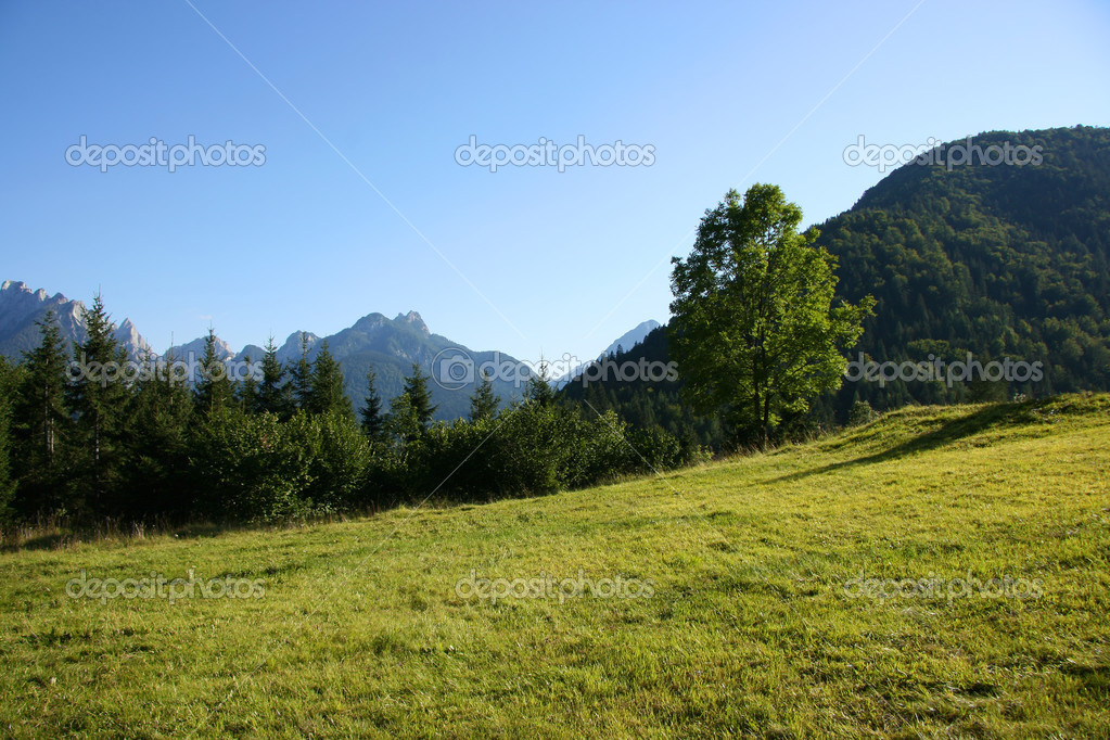 Alpine meadow at sunset, Giulian alps — Stock Photo #2470740