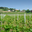 Stock Photo: Vineyard and winery