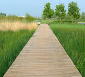 Boardwalk on the swamp — Stock Photo