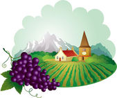 Provence background with grape — Stock Vector