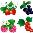 Set of berry - Stock Vector