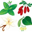 Set of aromatic plants — Stock Vector
