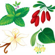 Set of aromatic plants - Stock Vector