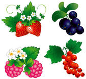 Set of berry — Stock Vector