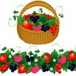 Basket of berries — Stock Vector #2341553