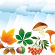 Autumn natural oblects - Stock Vector