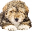 Cute little fur ball - Foto Stock