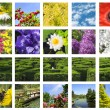 bloem collage — Stockfoto