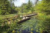 Path in botanical garden — Stock Photo