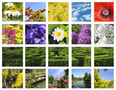Flower collage — Stockfoto