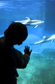 Child silhouette at aquarium — Stock Photo