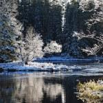paisaje después de heladas de invierno — Foto de Stock