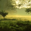 Mystic foggy landscape - Stock Photo