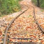 Train track in autumn — Stock Photo #2685521