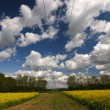 Stock Photo: Rapefield