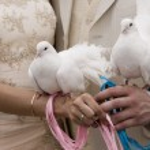 White doves — Stock Photo