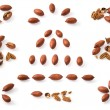Pecan collection — Stock Photo