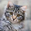 Stock Photo: Portrait of a beautiful cat cute kitten