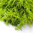 Fresh herb green dill over white - Stock Photo