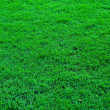 Vivid green fresh grass field background — Stock Photo