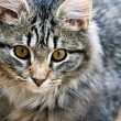 Stock Photo: Portrait of beautiful cat kitten