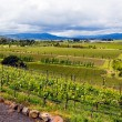 Landscape view vineyards in California - Stock Photo